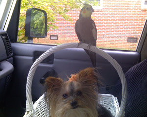 Lacy&Precious going for a ride